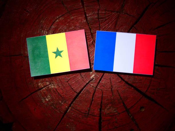 Bandeira do Senegal com bandeira francesa sobre um toco de árvore isolada - foto de acervo
