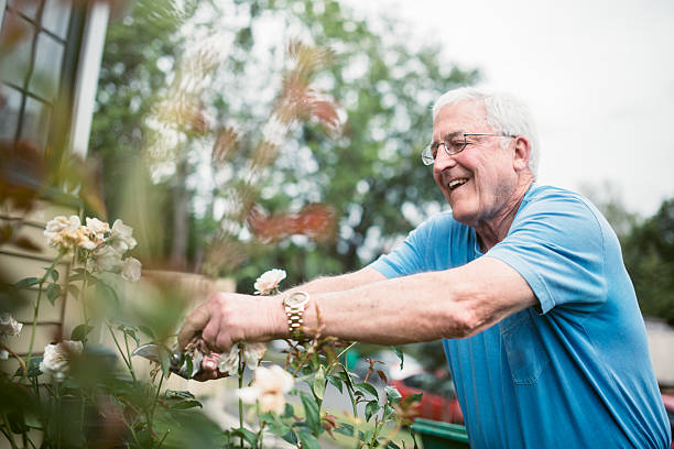 senior adult man doing yardwork - independence stock photos and pictures
