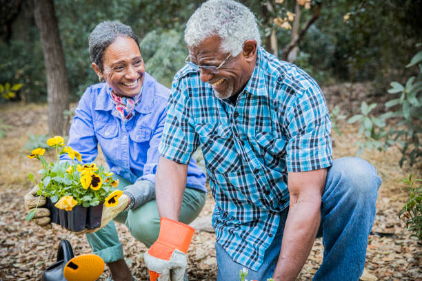Senior African American Couple Planting in Garden A senior retired black couple enjoying time together in the garden. gardening stock pictures, royalty-free photos & images