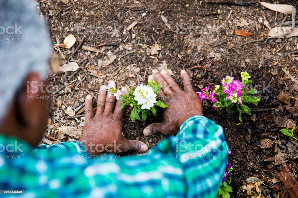 Senior African American Man die aanplant in de tuin foto