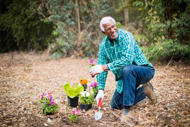 Senior African American Man Planting in the Garden stock photo