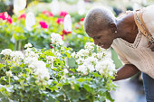 A senior African-American woman in her 60s shopping in a garden center or plant nursery. She is surrounded by potted plants, bending down to smell some flowers.