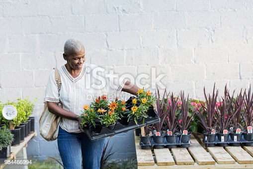 A senior African-American woman in her 60s shopping in a garden center or plant nursery. She is carrying a tray of flowers to plant in her garden.