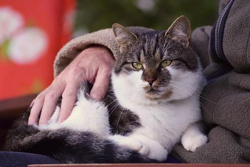 istock Senior and cat 1173351541