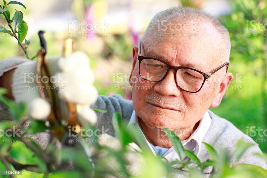 senior asian man working in the garden stock photo