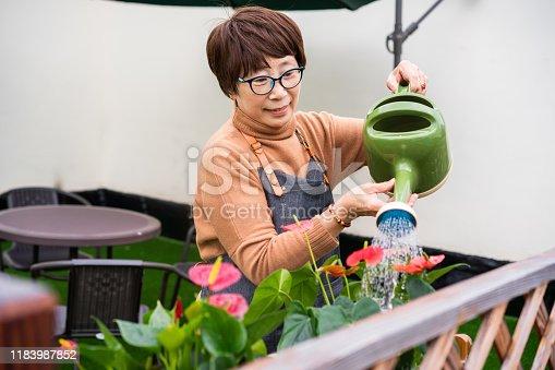 Senior Asian woman watering flowers in her yard.