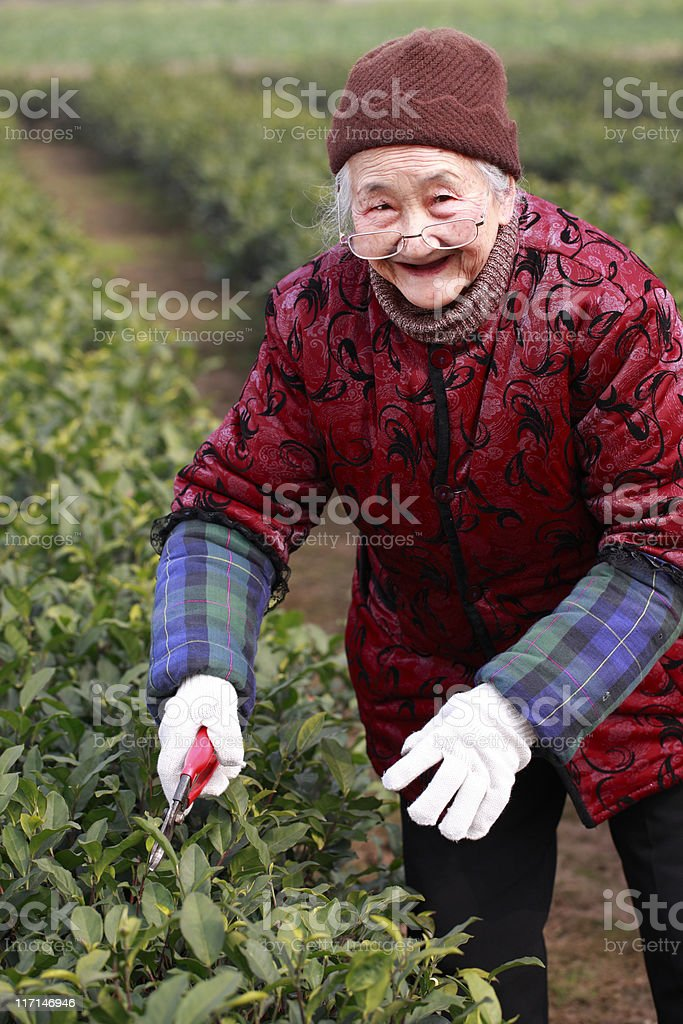 senior asian woman working in the garden royalty-free stock photo