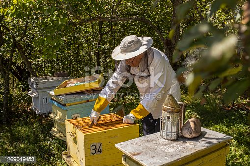 Mature experienced beekeeper working in his apiary and checking the beehives