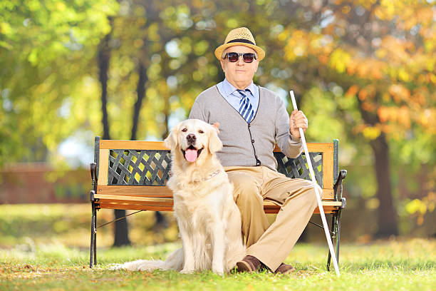 Senior blind gentleman sitting on bench with his dog stock photo