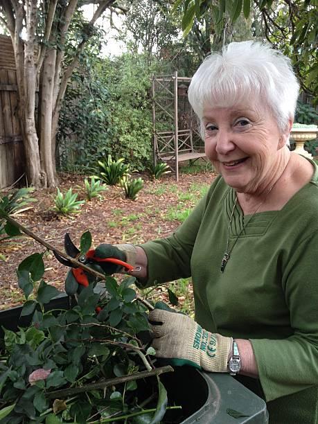 Senior Caucasian Lady Gardening, Daytime, in Australia, vertical shot stock photo