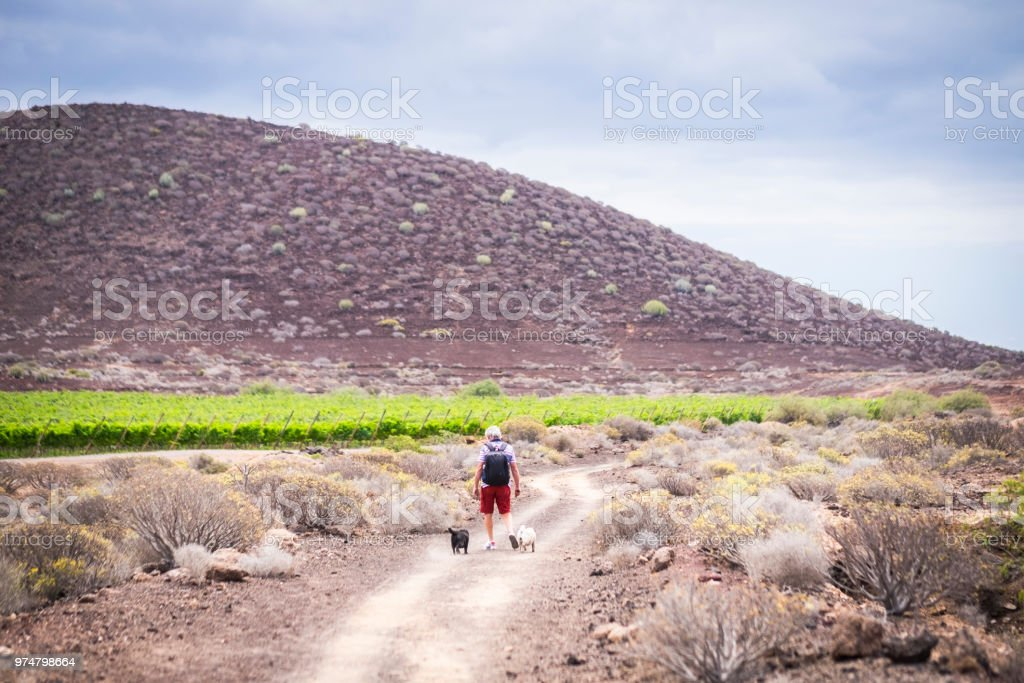 senior caucasian man have fun and enjoy a trekking walk in a path between mountain and vineyards with his companion dogs pug in totally friendship forever. together discovering new places stock photo