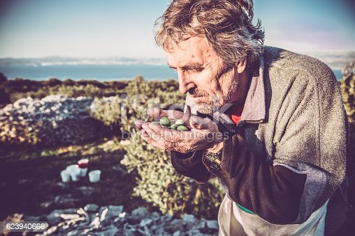 istock Senior Caucasian Man with Handful of Olives, Brac, Croatia, Europe 623940666