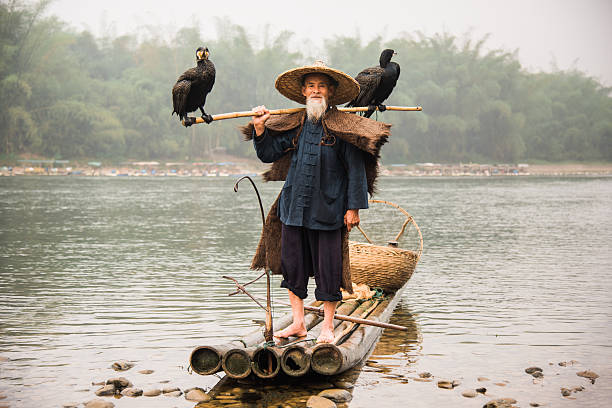 senior chinese fisherman returns home with cormorants li river china - editorial stock-fotos und bilder