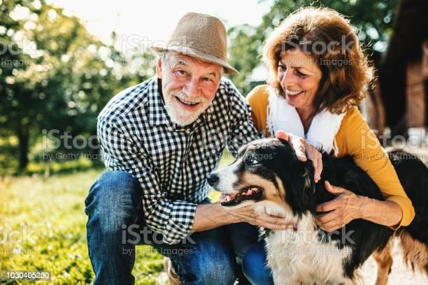 Senior couple crouching and petting a dog picture id1030405230?b=1&k=6&m=1030405230&s=612x612&h=a ewyi1ztfqfh2zimdcb65wg dnotd6d2ddkdgwxnbk=