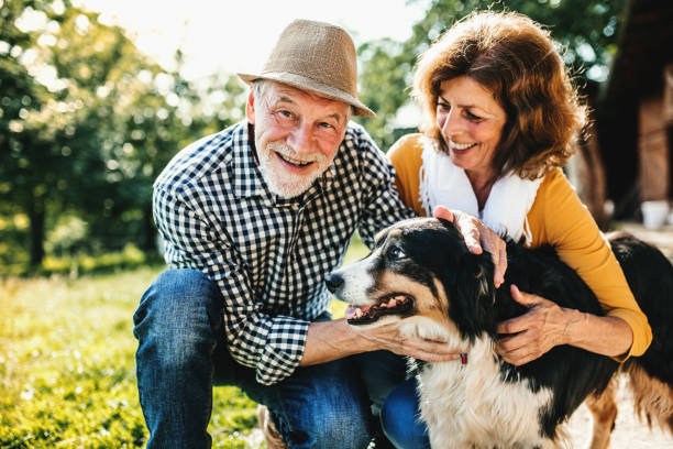 a senior couple crouching and petting a dog. - take care of your jeans imagens e fotografias de stock