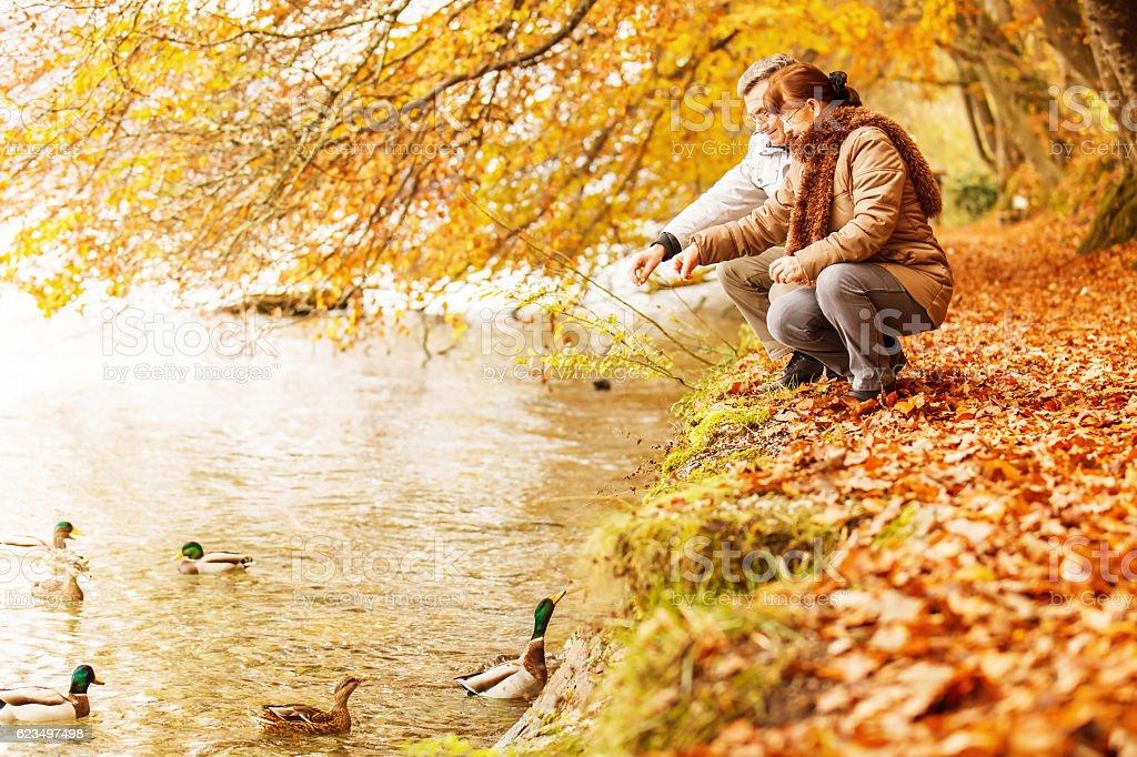 Senior Couple feeding Ducks on the Lake stock photo