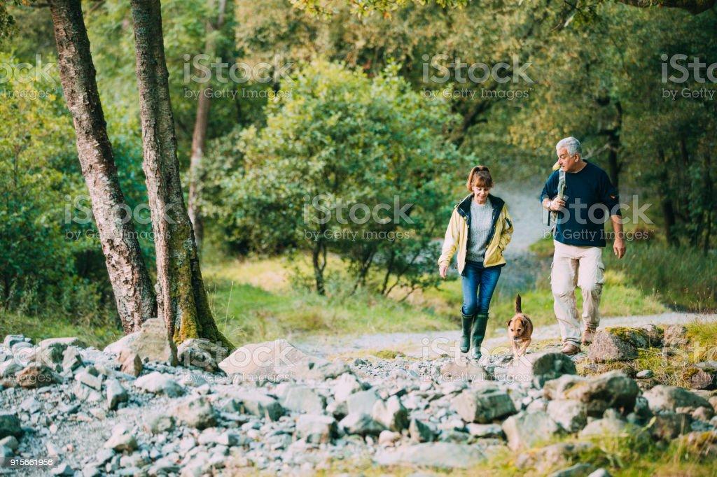 Casal sênior caminhadas com cachorro - foto de acervo