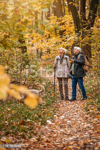 874818944 istock photo Senior Couple Hiking With Their Dog 1187993593
