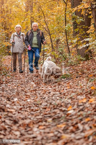 874818944 istock photo Senior Couple Hiking With Their Dog 1187993603
