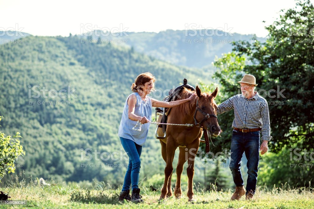 A Senior Couple Holding A Horse By His Lead On A Pasture Stock Photo Download Image Now Istock