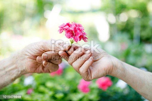 Senior hands giving flower selective focus