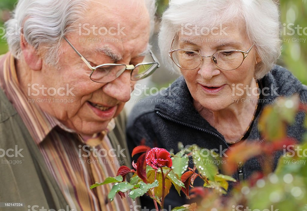 Senior couple looking to a rose royalty-free stock photo