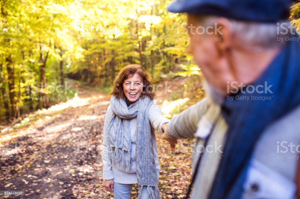 Senior couple on a walk in autumn forest. stock photo
