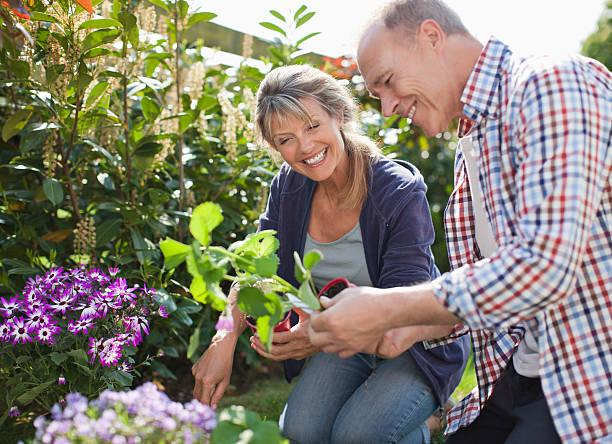 Senior couple planting in garden stock photo