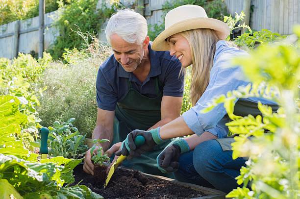 pareja de edad mayor de plantación - jardinería fotografías e imágenes de stock