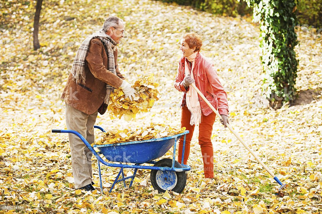 Senior couple raking leaves. stock photo