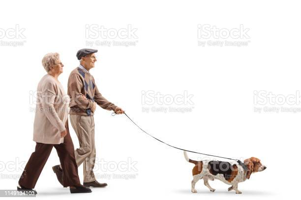 Senior couple walking a basset hound dog picture id1149134103?b=1&k=6&m=1149134103&s=612x612&h=6cfglttewggiw 2yfy4n8aarmuy521dorfb8g6jp14m=