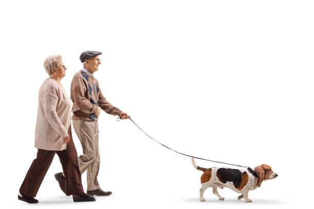 Senior couple walking a basset hound dog picture id1149134103?b=1&k=6&m=1149134103&s=612x612&w=0&h=gbqxrlsihwgzq4eaeytxfbu9oyifsruagwqbcgru6ro=