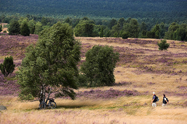 Senior couple walking on beautiful heathland (XXL) Senior couple walking on beautiful heathland back to their bicycles standing under birch tree. Location: Lueneburger Heide in Lower Saxony/Germany. lüneburg stock pictures, royalty-free photos & images