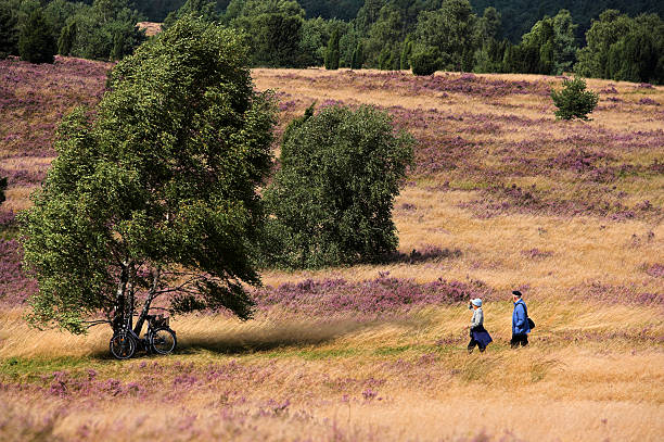 Senior couple walking on heathland with birch trees (XXL) Senior couple walking on heathland in Lower Saxony/Germany (Location: Lueneburger Heide). lüneburg stock pictures, royalty-free photos & images