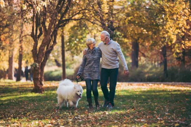 äldre par rastade sin hund i parken - hund skog bildbanksfoton och bilder