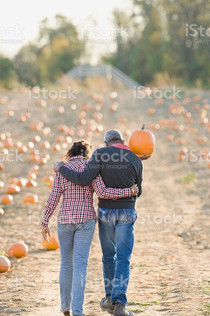 Um casal idoso a andar num campo de abóboras foto de stock royalty-free