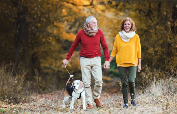 Senior couple with a dog on a walk in an autumn nature picture id1074265890?b=1&k=6&m=1074265890&s=612x612&w=0&h=sz07fx7ryjjjbfltf5yraj5wgovmzp6ebumivt55t m=