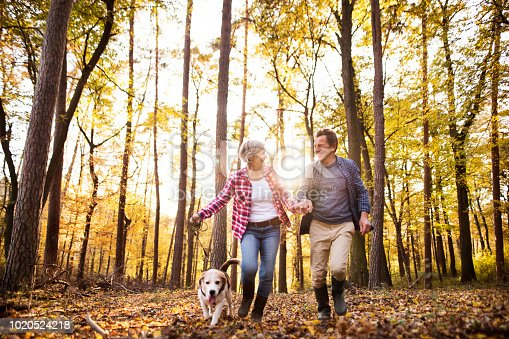 istock Senior couple with dog on a walk in an autumn forest. 1020524218