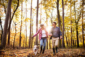Active senior couple with dog on a walk in a beautiful autumn forest, running.