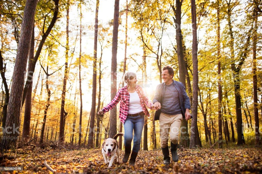 Casal sênior com o cão a passear em uma floresta de outono. - foto de acervo