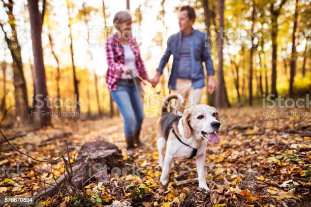 Senior couple with dog on a walk in an autumn forest picture id876670894?b=1&k=6&m=876670894&s=612x612&h=vcfc za4cb3w jcnfrwmuhwrckoahtlbpnsp 9bzi30=