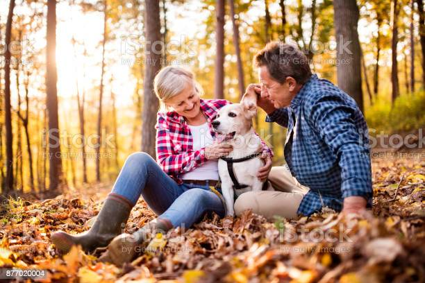 Senior couple with dog on a walk in an autumn forest picture id877020004?b=1&k=6&m=877020004&s=612x612&h=davq3q1wngimrzbtqtwrefzxxrrk1 ubxet7aetizwc=