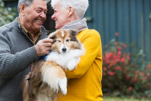Senior couple, woman holding therapy dog stock photo
