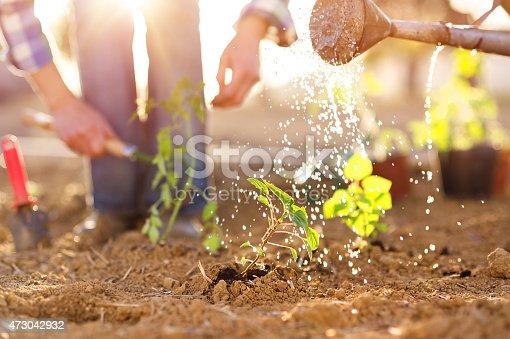 istock Senior couple working in garden 473042932