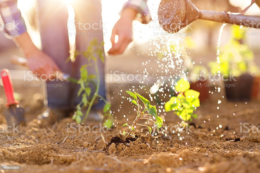 Senior couple working in garden stock photo