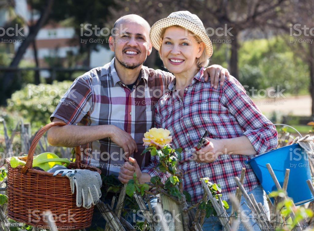 Senior couple working in the garden stock photo