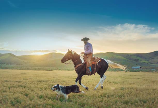 Senior cowboy horseback riding Senior cowboy horseback riding rancher stock pictures, royalty-free photos & images