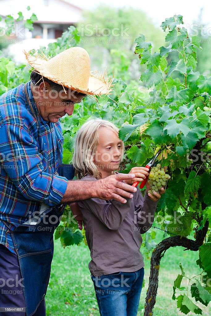 Senior Farmer and Young boy in Vineyard royalty-free stock photo