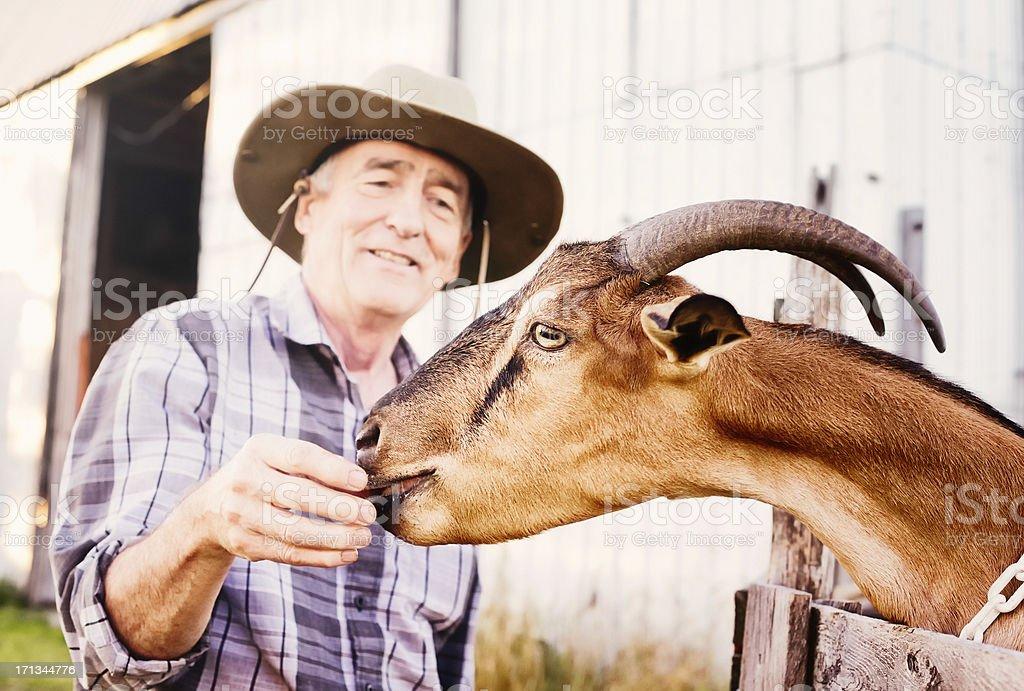 Senior farmer hand feeding his goat close-up horizontal stock photo