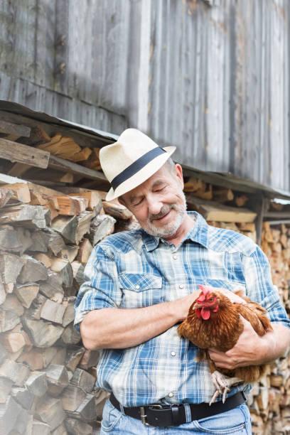Oberer Landwirt hält Henne, während sie in Baumstämmen auf dem Bauernhof stehen – Foto